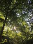 woods, trees, eastern carolina, eastern north carolina