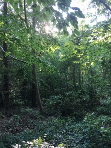 trees, woods, jungle, eastern carolina, eastern north carolina