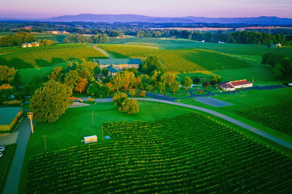 Shelton Vineyard and Winery, Shelton winery, elaina m. avalos, elaina avalos